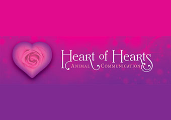 Click for more details about Heart Of Hearts Animal Communication